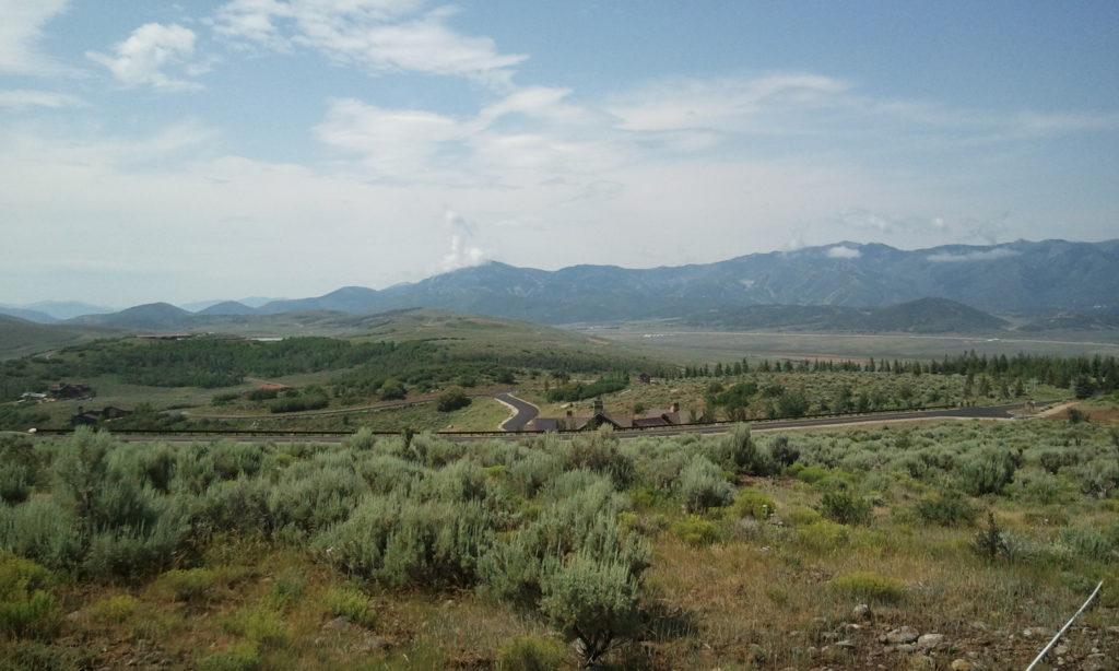 Desert Plants in Utah
